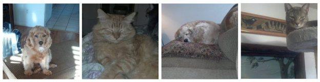 Julie's Pets