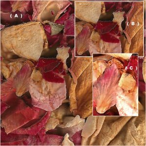 three scans of a set of leaves.